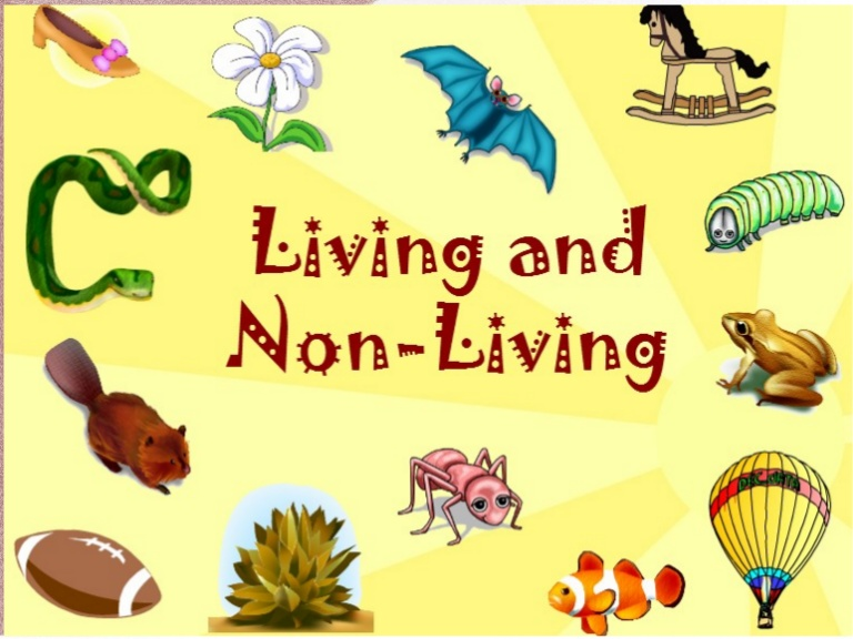 And things . Crayon clipart non living