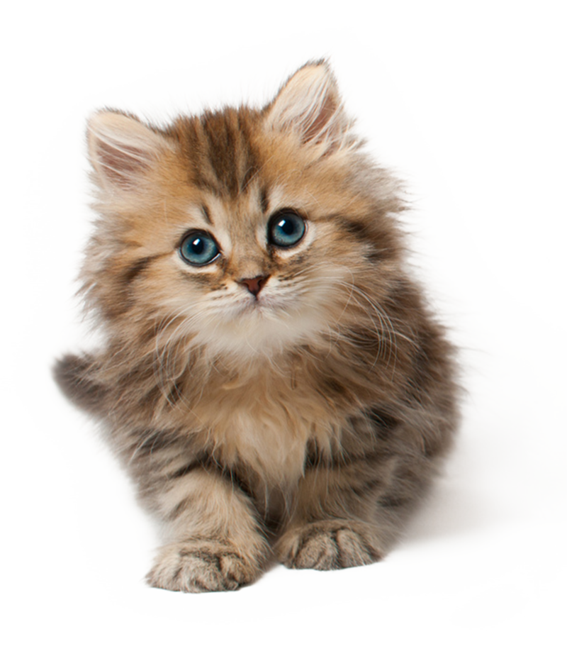 Concrete vs abstract nouns. Kitten clipart baby kitten