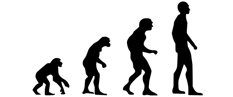Evolution of silhouette at. Human clipart neanderthal man