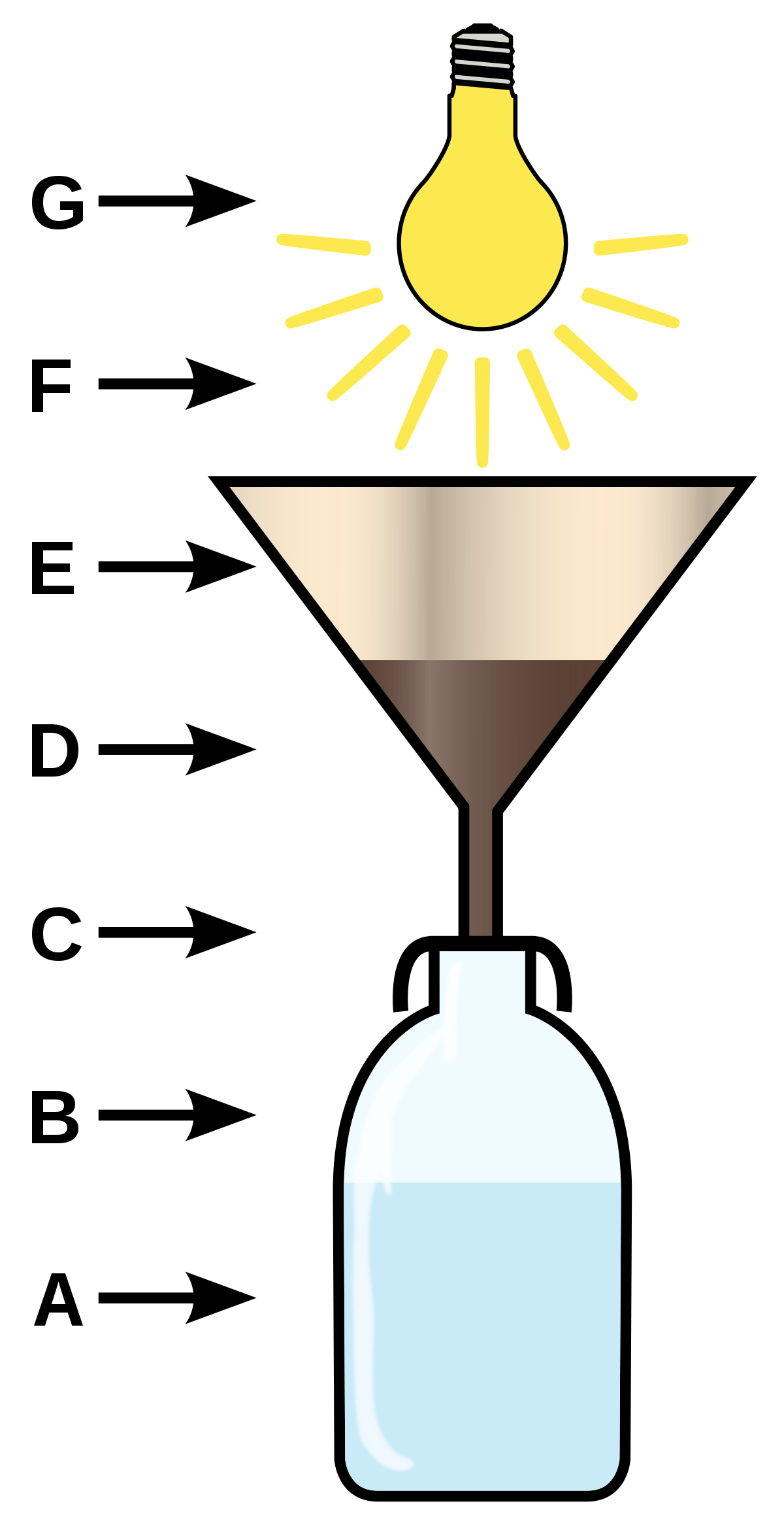 Tullgren funnel wikipedia . Creation clipart living thing