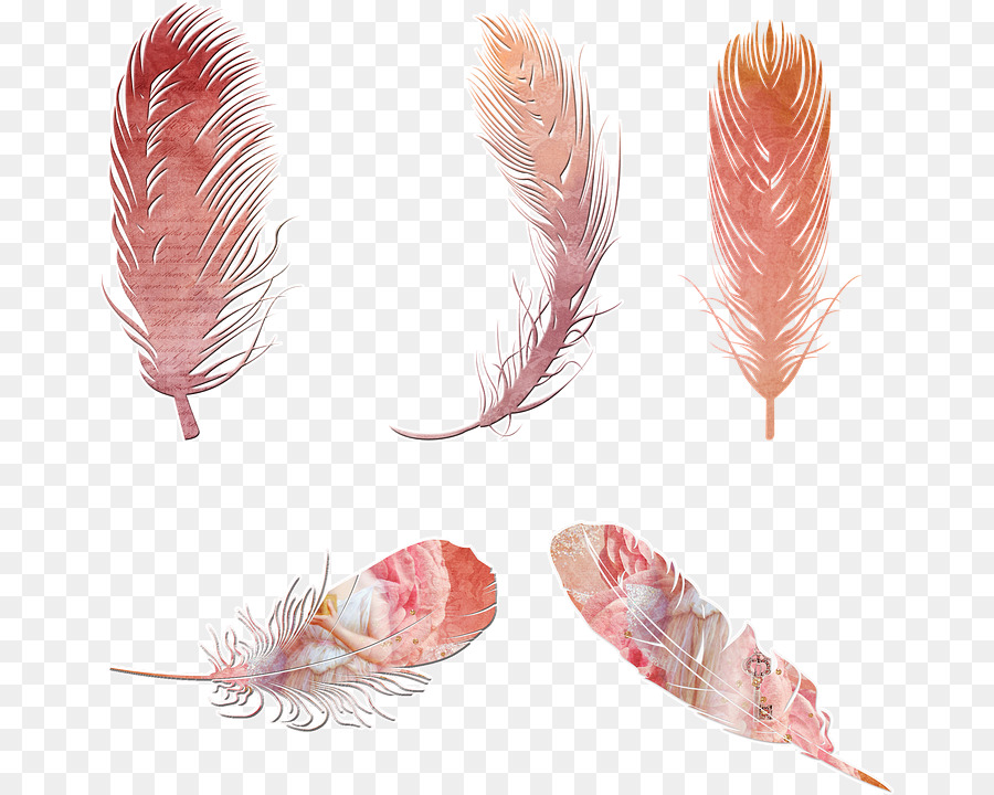 Pink background transparent clip. Creative clipart bohemian feather