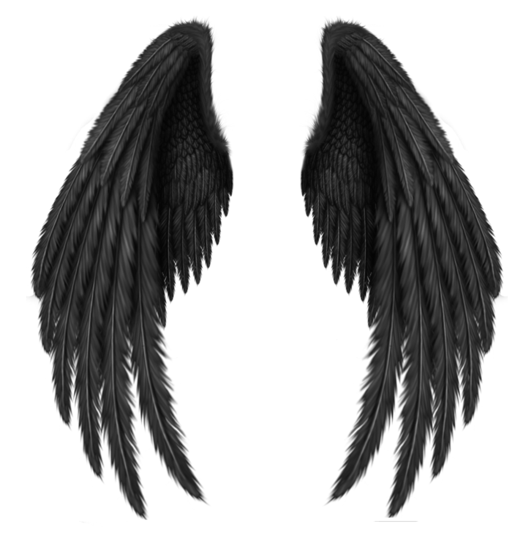 Transparent black wings png. Wing clipart supernatural
