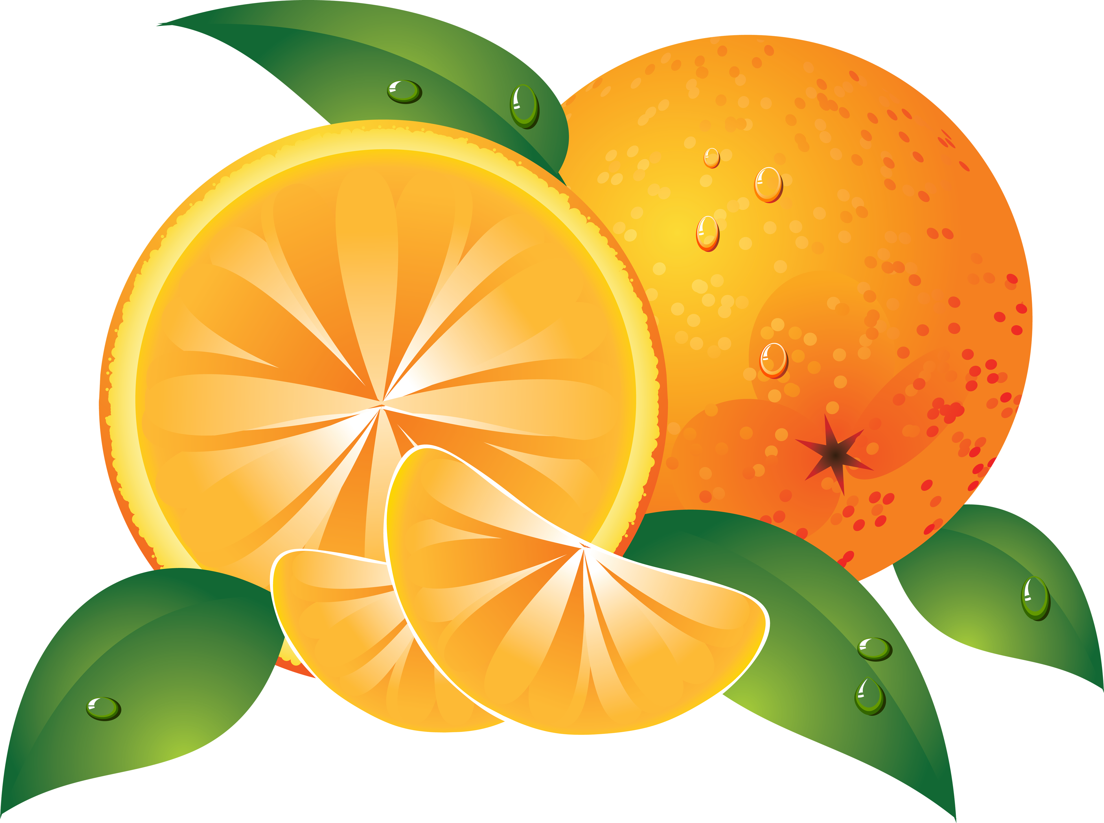 Mandarin orange free on. Cricket clipart colour
