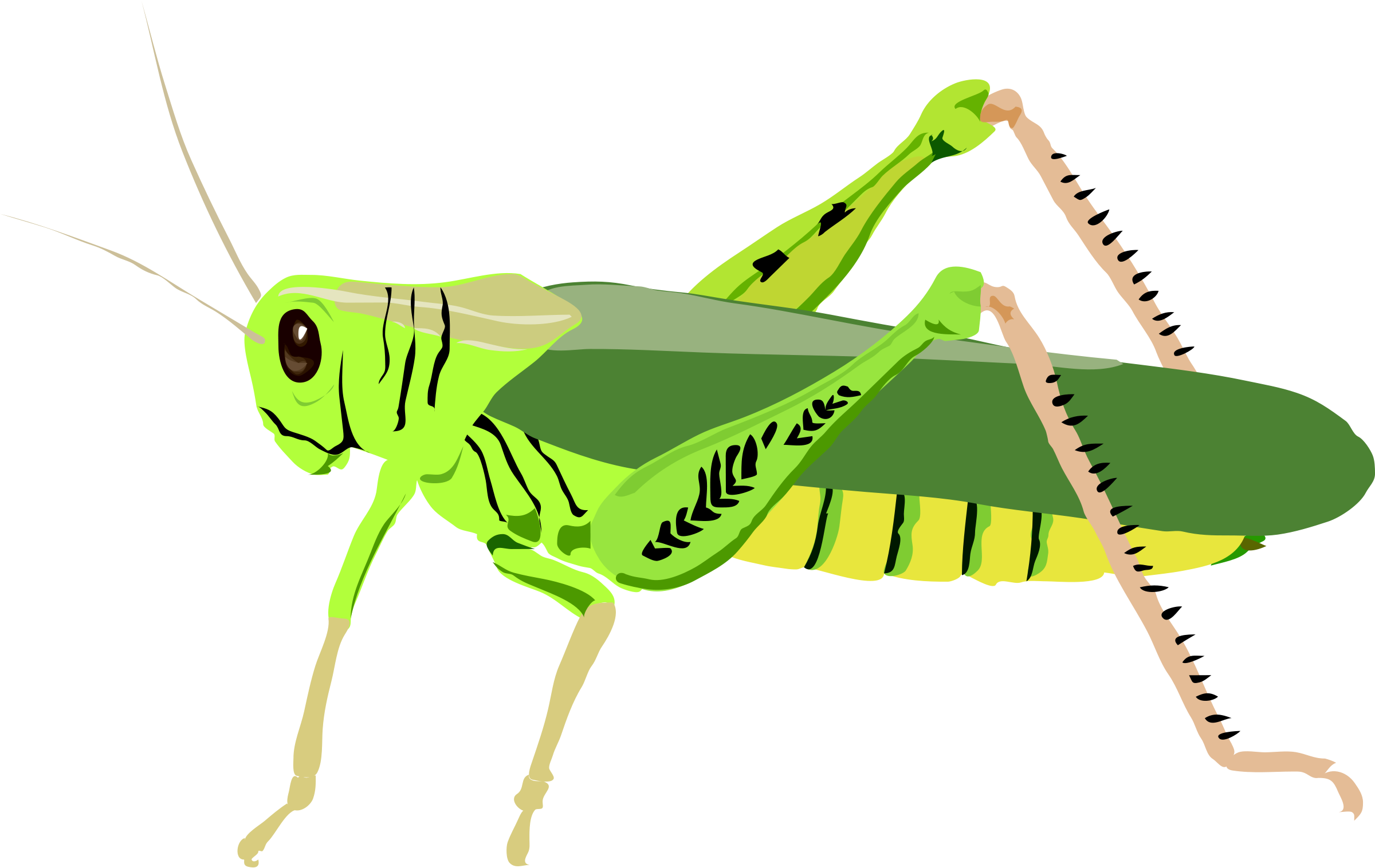 Grasshopper clipart sketch. Images panda free clip