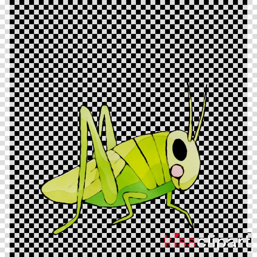 Cricket clipart illustration. Cartoon graphics