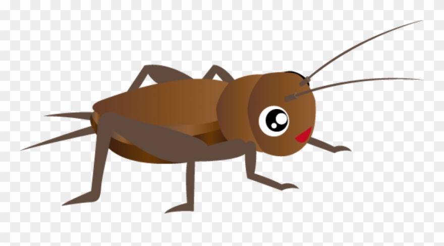 Cricket clipart insect. Free images transparent png