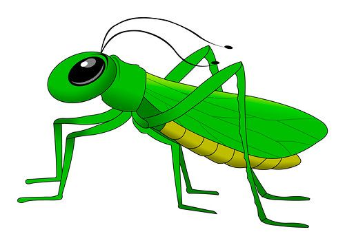 Cricket clipart insect. Free download best