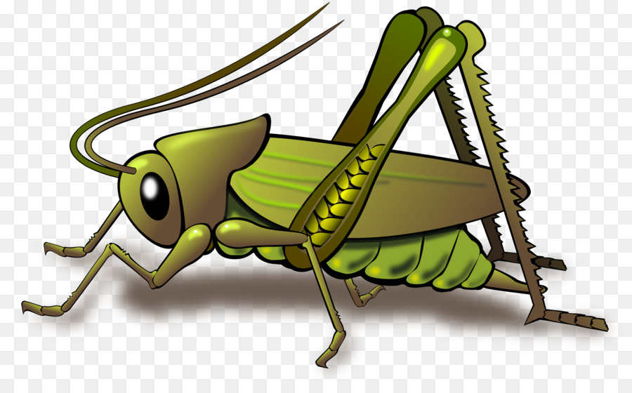 Clip art . Insect clipart insect grasshopper