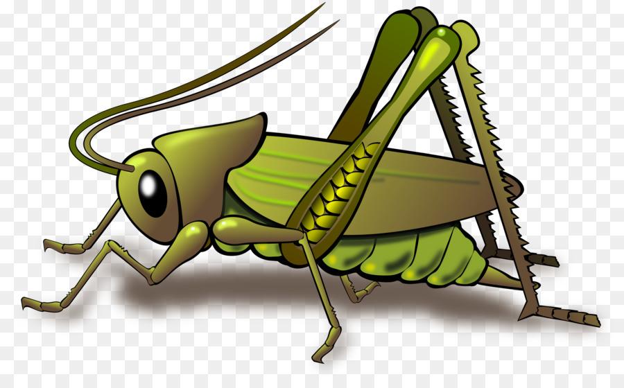 Grasshopper clipart insect grasshopper. Clip art
