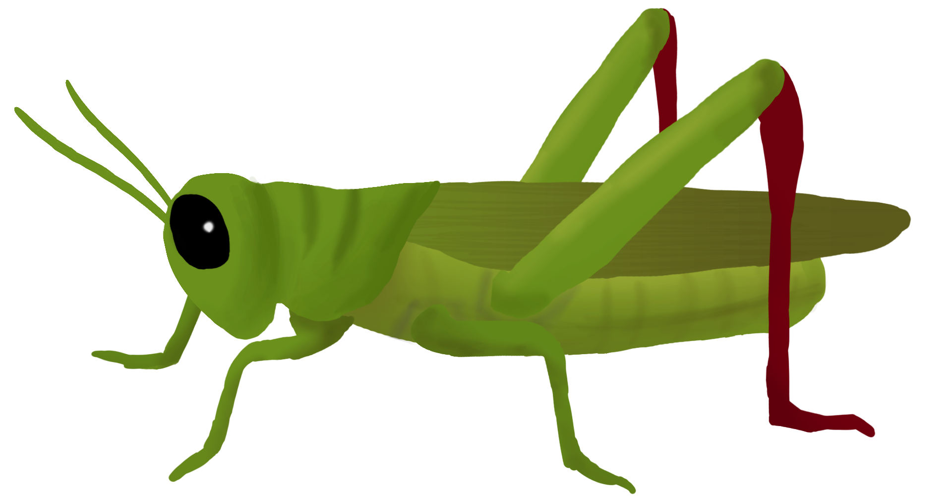 Insect clipart insect grasshopper.  collection of cricket