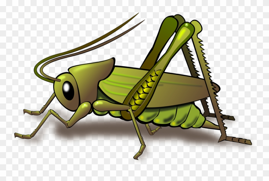 Cartoon chirping png . Cricket clipart insect