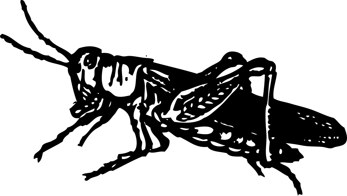 Grasshopper clipart sketch. Outline panda free images