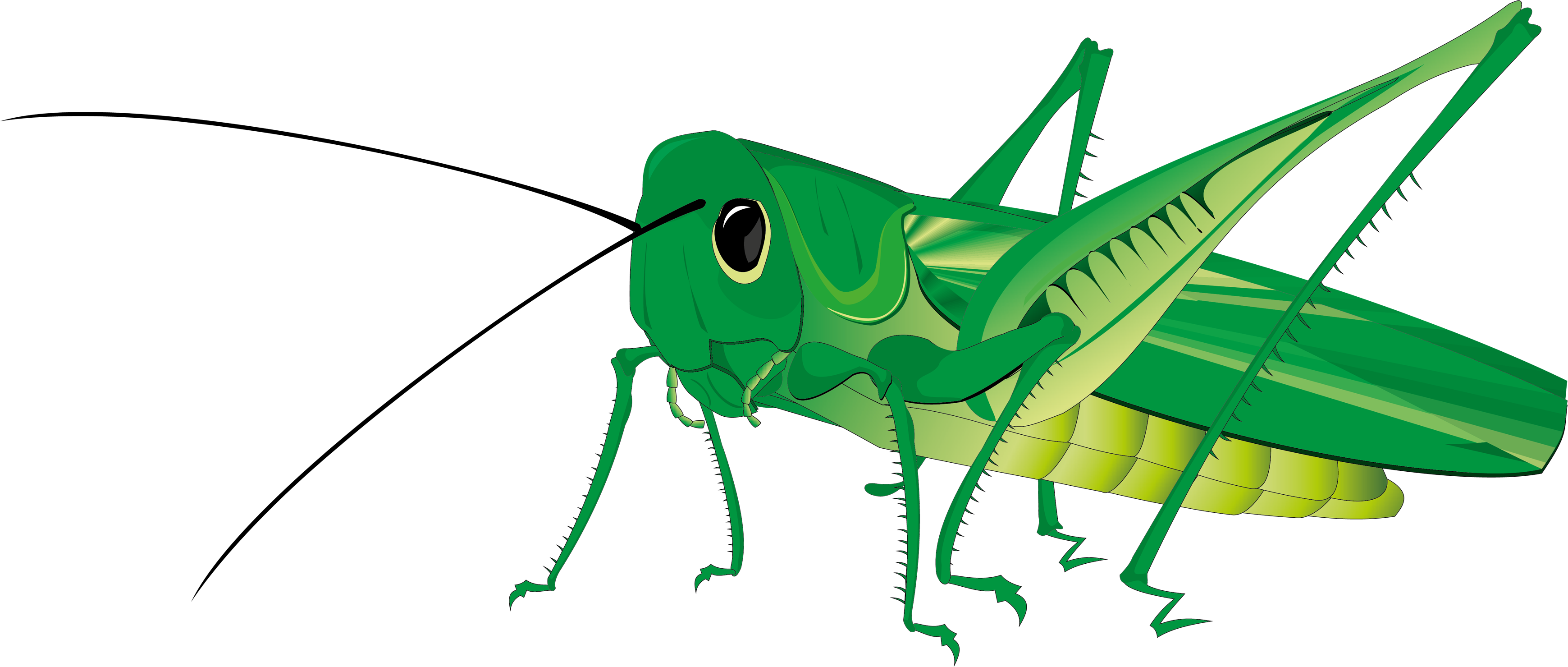 Grasshopper png images free. Insects clipart katydid