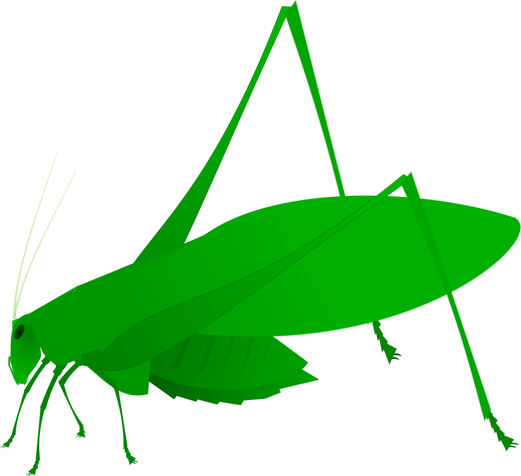 Insects clipart katydid. File oblong winged green
