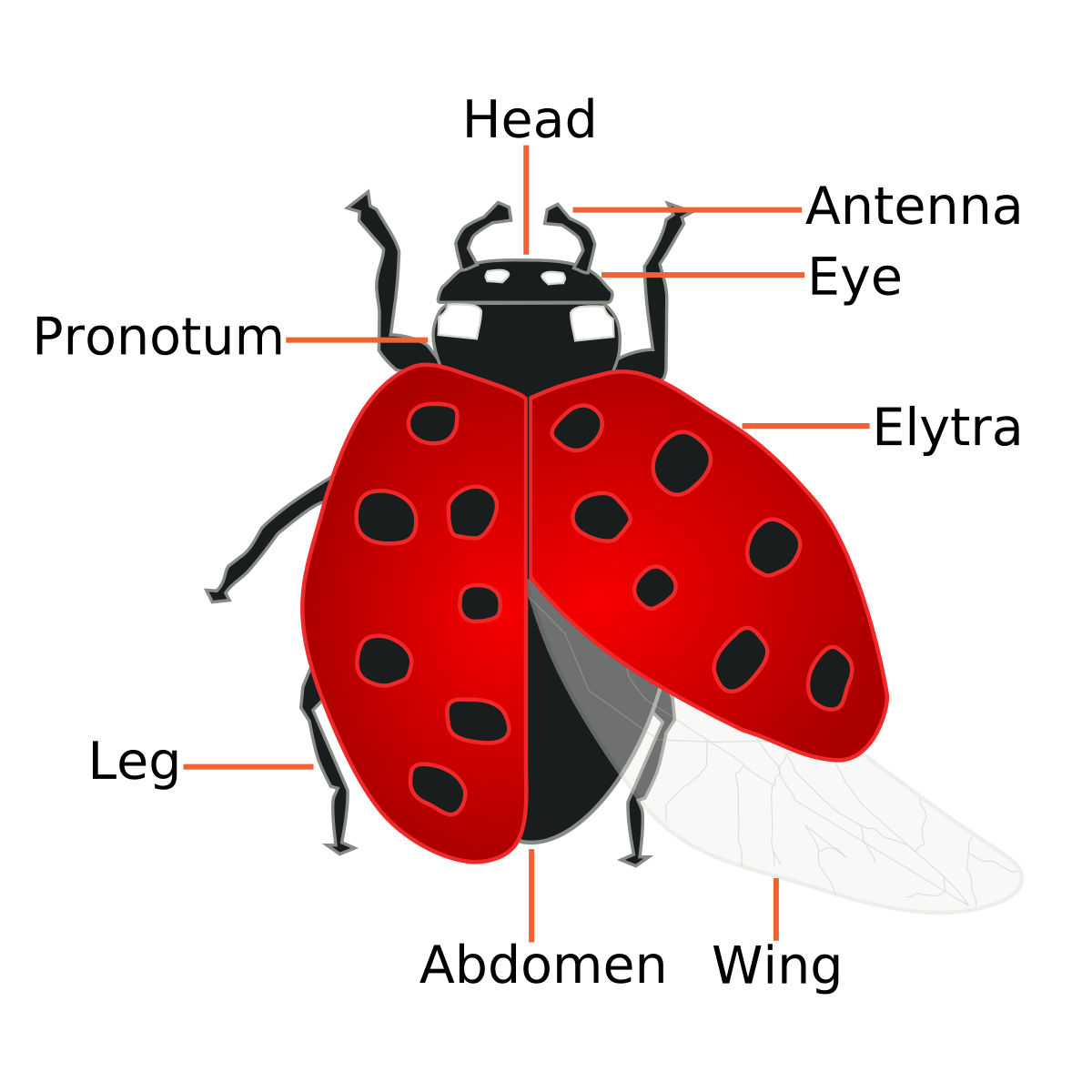Forensic entomology wikipedia . Hunter clipart entomologist
