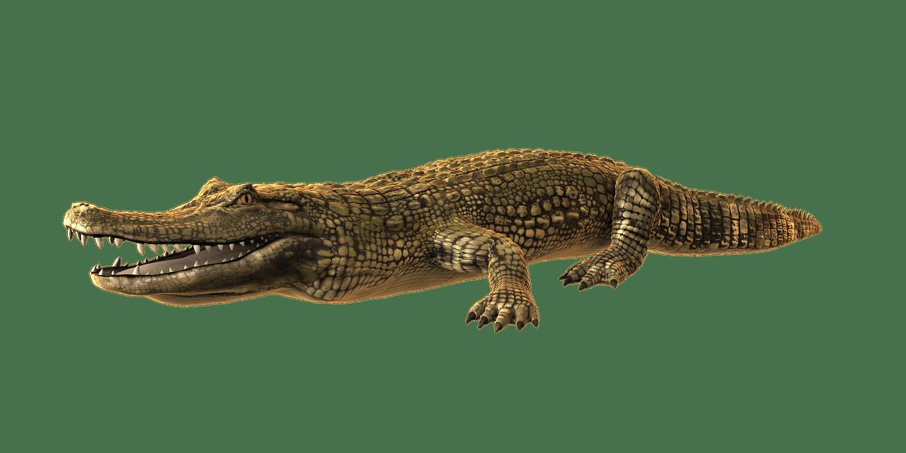 Transparent png stickpng. Crocodile clipart caiman