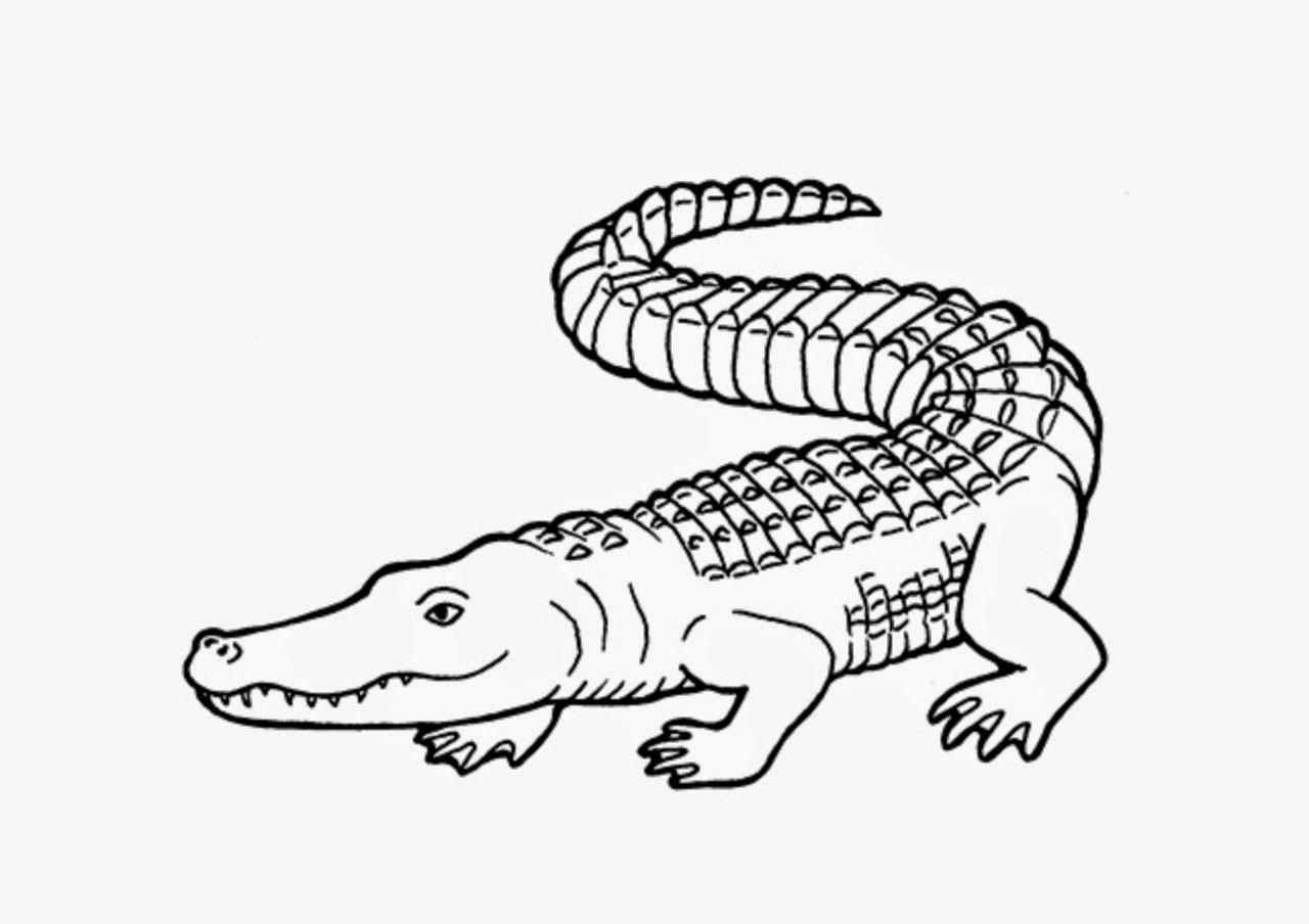 Crocodile clipart drawn, Crocodile drawn Transparent FREE ...