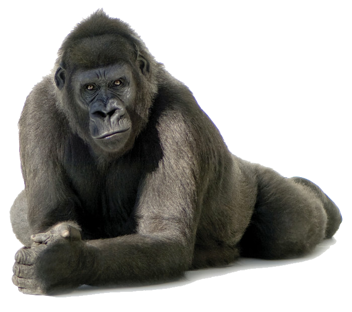 Eyes clipart gorilla. Download free png image