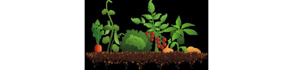 Plants . Crops clipart