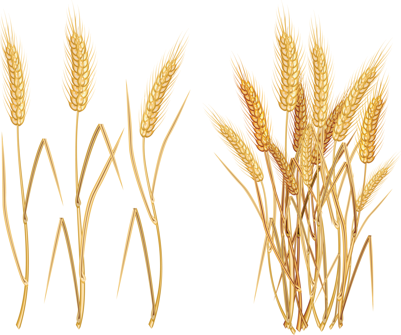 D ff e png. Tree clipart wheat
