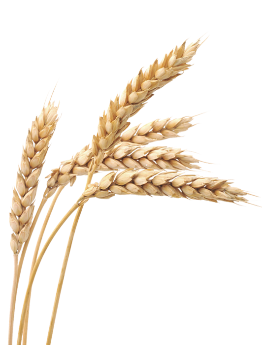 Png images free download. Land clipart wheat field