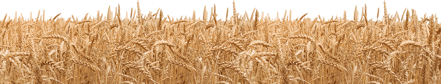 Png images free download. Grains clipart transparent background wheat