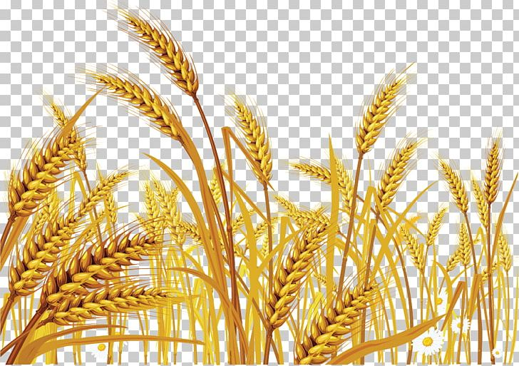 Download for free png. Wheat clipart wheat crop