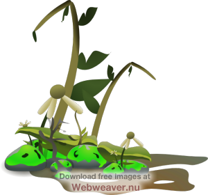 Crops clipart clip art. Dying plant