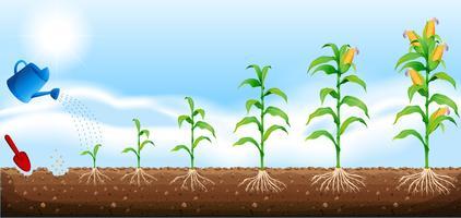 Plant free vector art. Crops clipart corn crop
