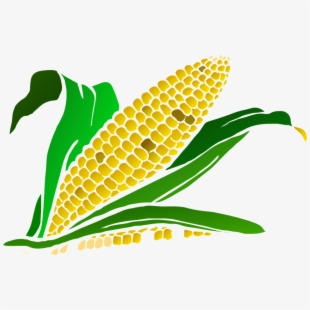 Harvesting free cliparts on. Crops clipart corn crop