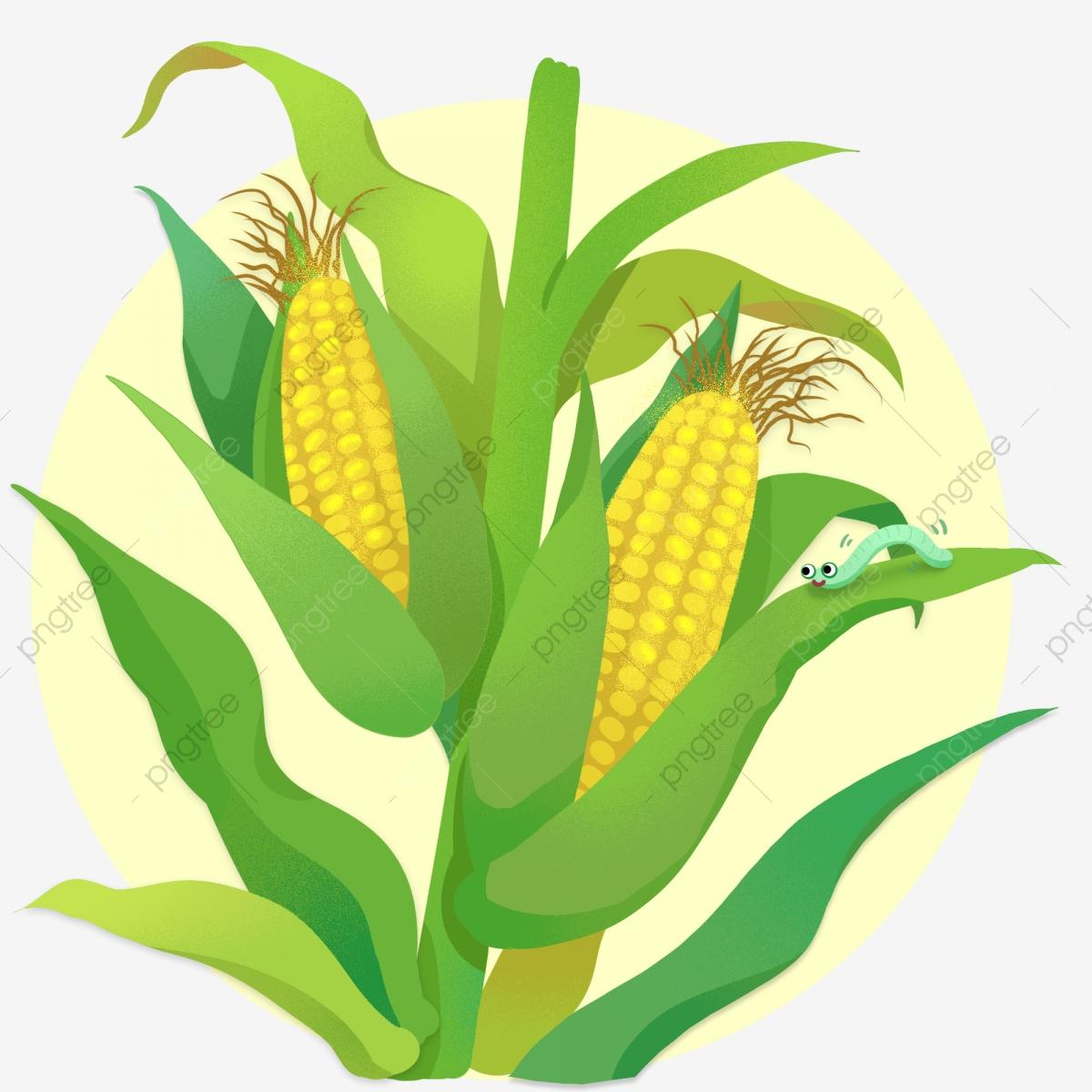 Crops clipart corn crop. Plants autumn and harvest