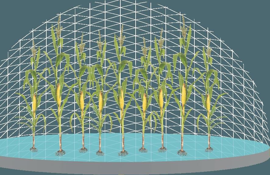 Crops clipart corn crop. Trecepta science genuity control