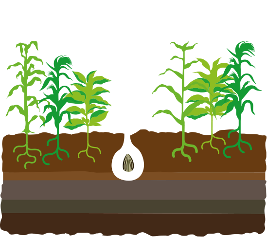 Seed story croplife international. Seedling clipart land plant
