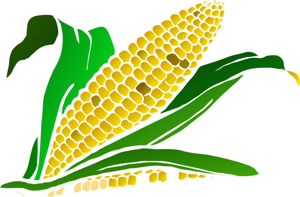 Crops clipart early agriculture. Free download best