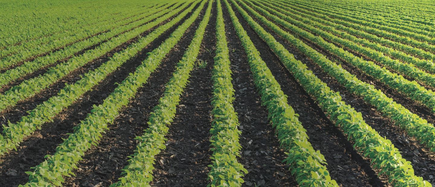 Precision irrigation solutions for. Crops clipart farmer chinese