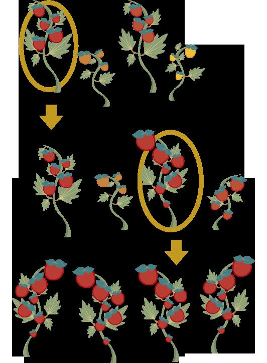 What is breeding b. Planting clipart farm plant