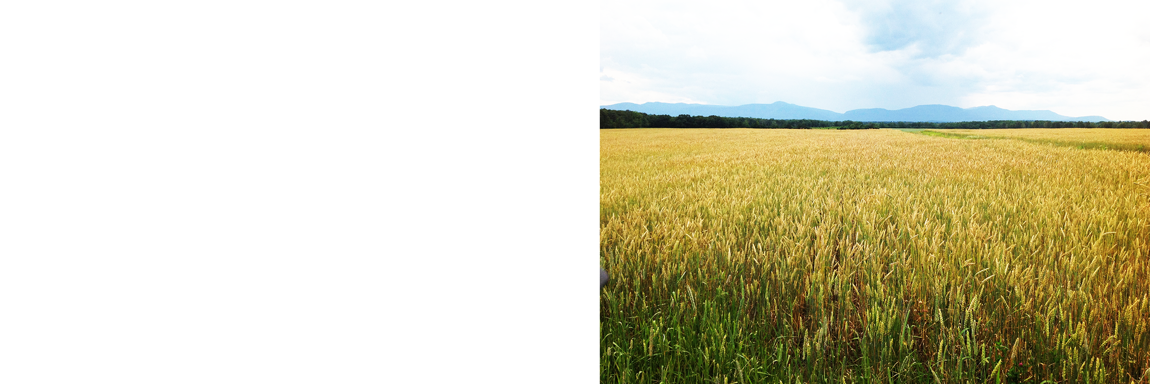 Grain png crc stone. Land clipart wheat field