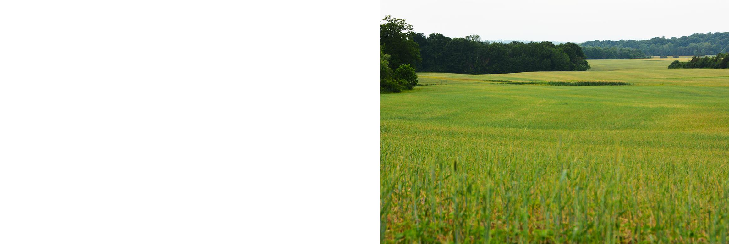 Stone house grain farm. Land clipart crop field