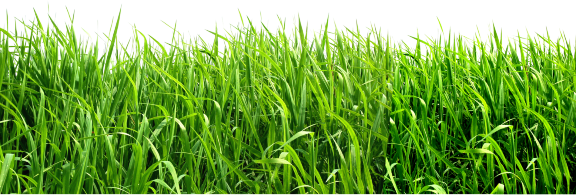 Dirt clipart grass. Png images pictures image