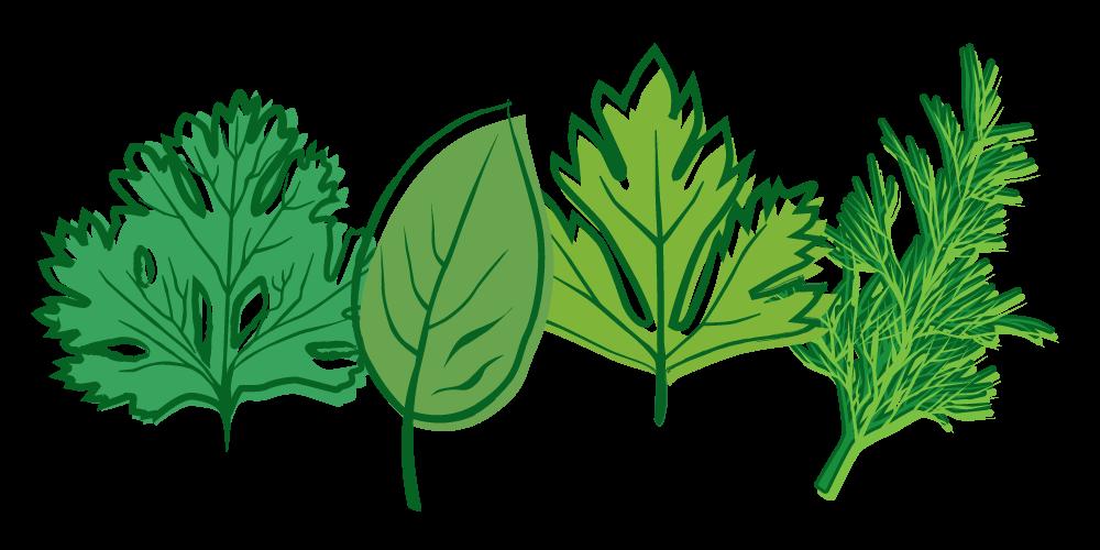 Organic ford hook zucchini. Garden clipart herb garden