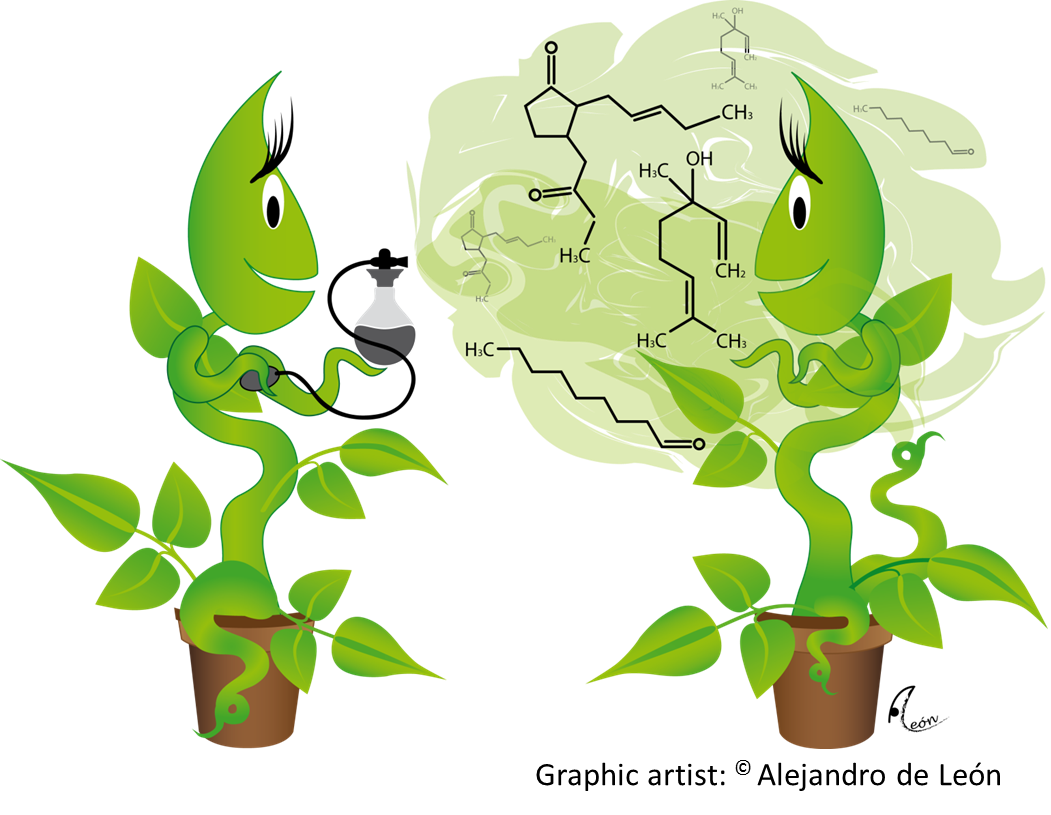 Crops clipart illustration. Optimizing for biocontrol of