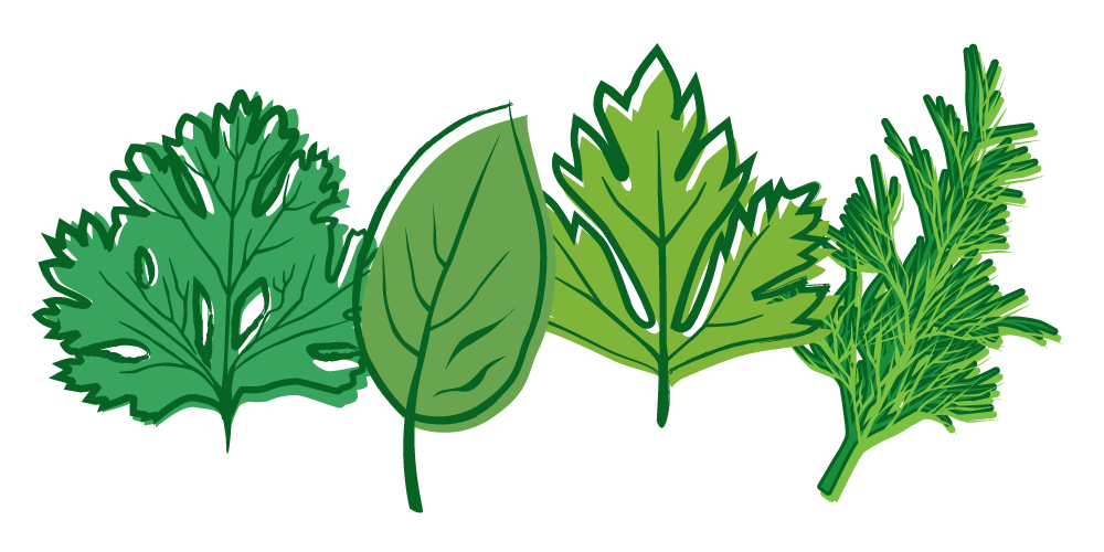 Plants clipart herb. Abdul majid sir classification