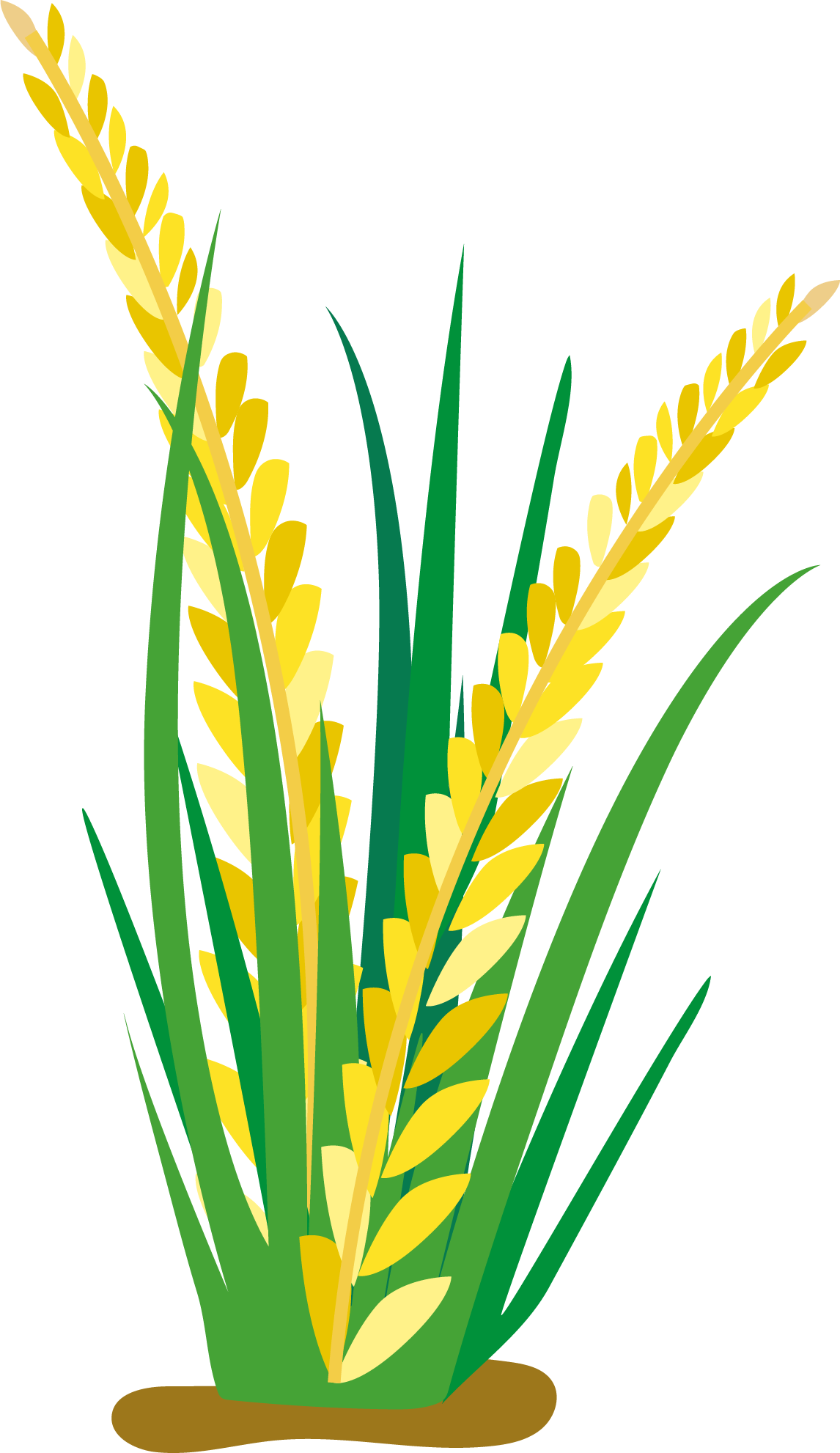 Cartoon oat clip art. Field clipart rice