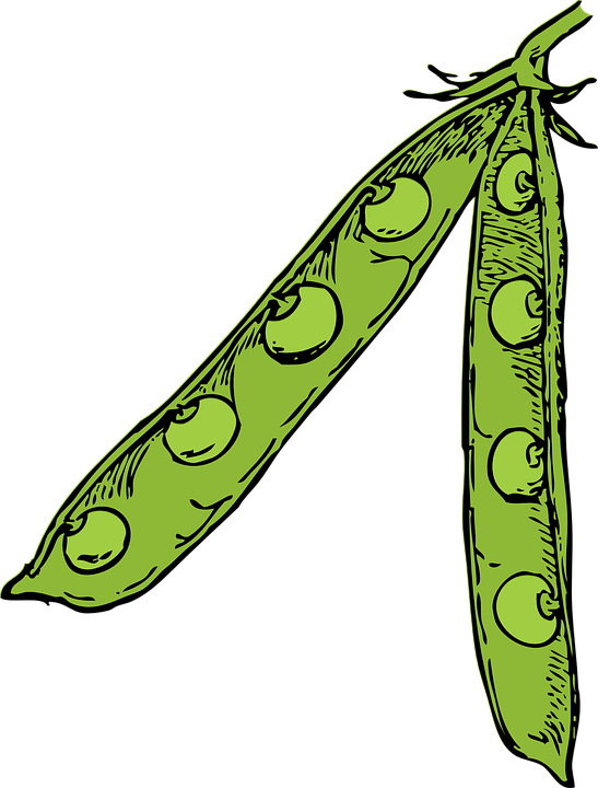Free image on pixabay. Pie clipart pea