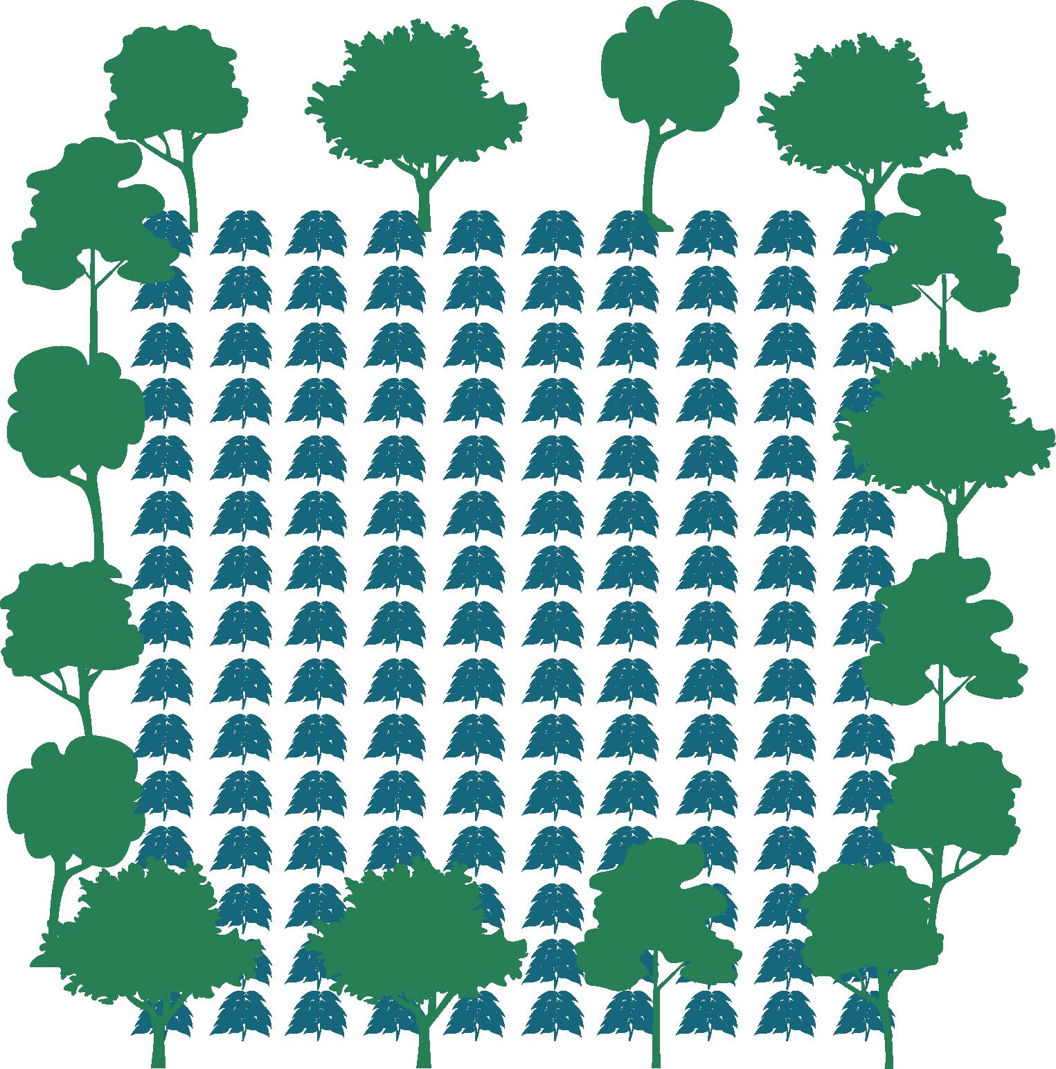Nordesta pur projetpur projet. Growth clipart tree plantation