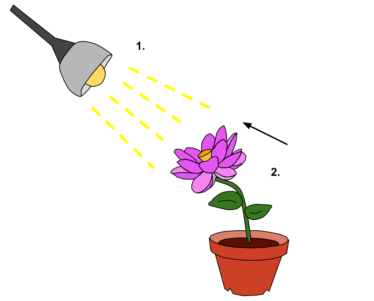 Phototropism wikipedia . Plants clipart living thing