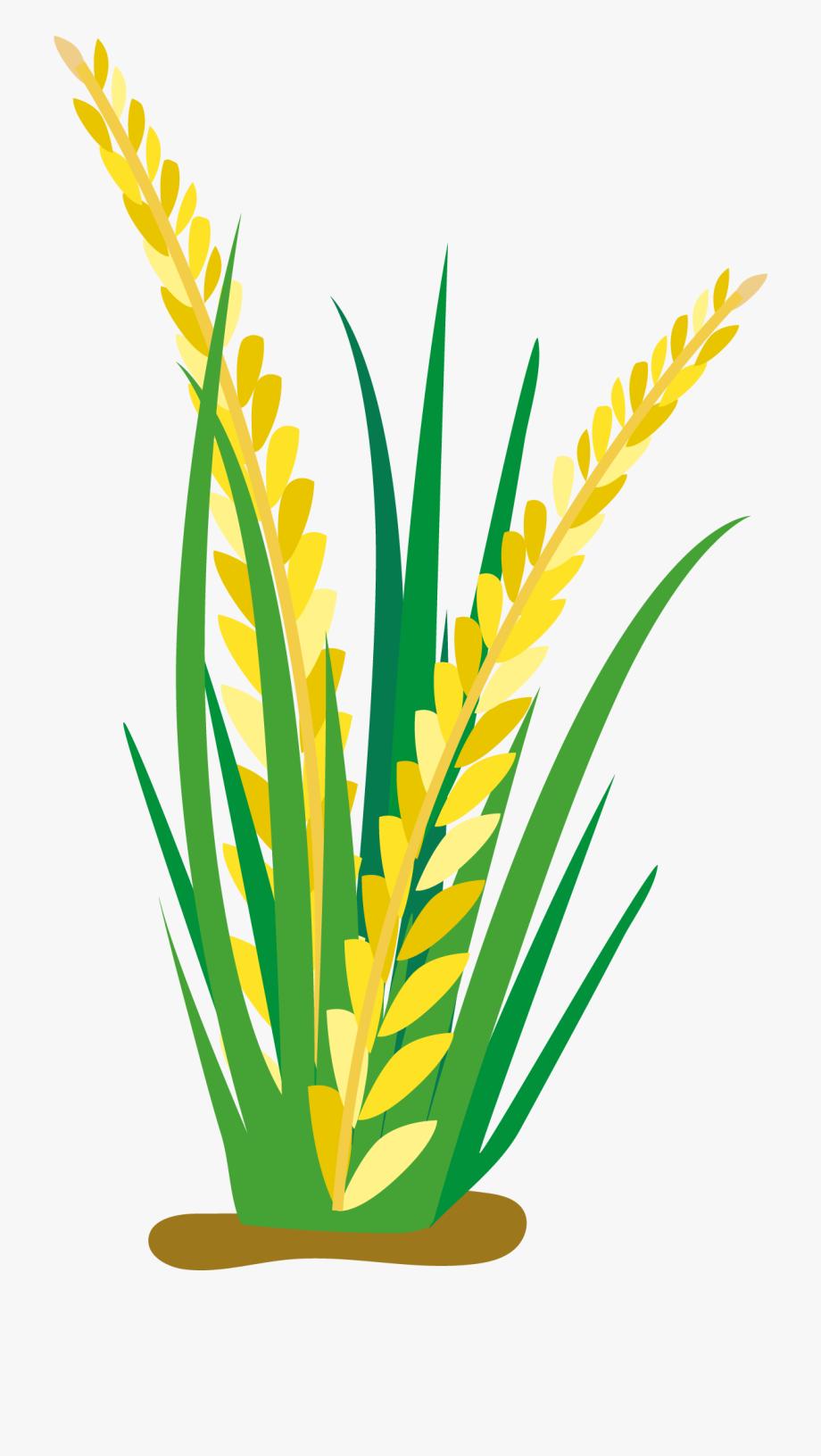 Planting clipart vector. Cartoon oat clip art