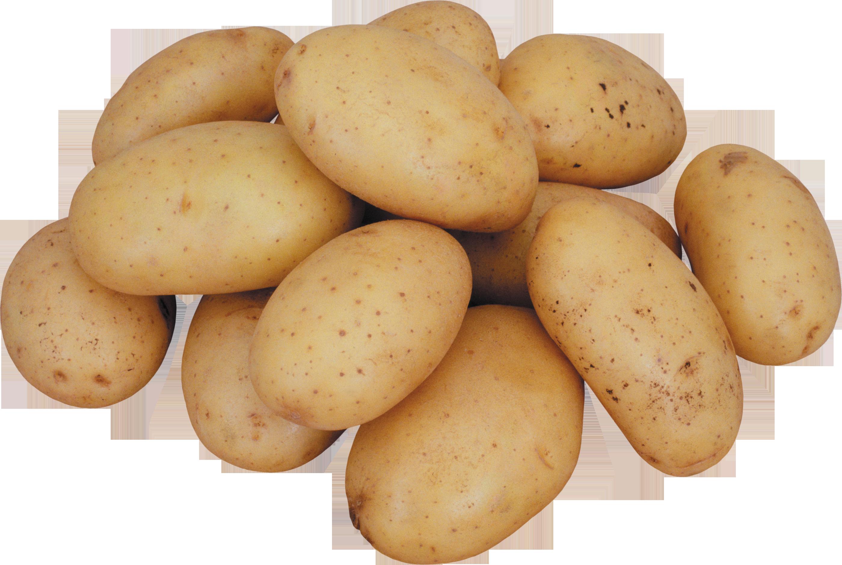 Png image purepng free. Potato clipart potato plant