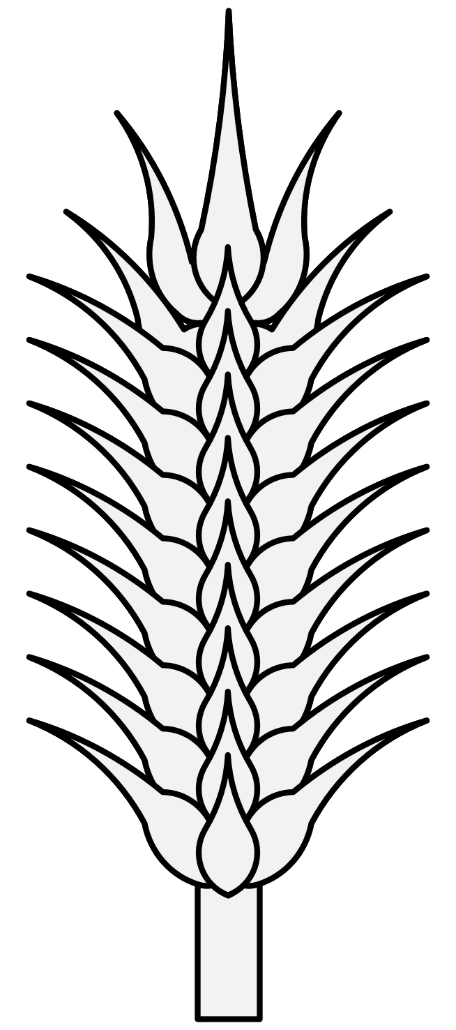 Wheat clipart hop. Plant drawing at getdrawings
