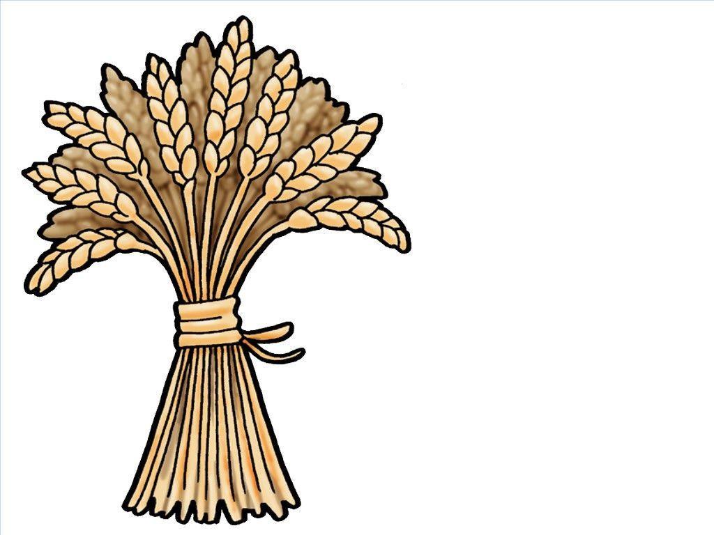 Of slide ruth and. Wheat clipart sheaf wheat